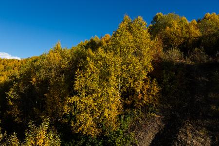 Colorful forest in a beautiful autumn landscape in Svaneti. Georgia.