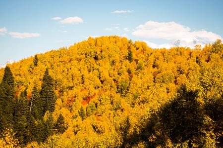 Colorful forest in a beautiful autumn landscape in Svaneti. Georgia. Toned.