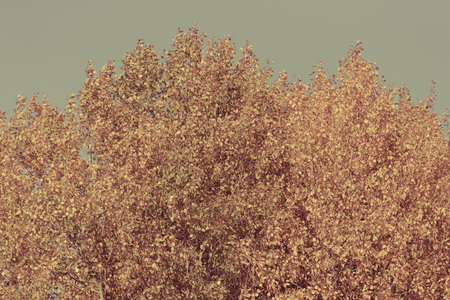 Trees with yellow leaves against the sky. Autumn. Toned. Stock Photo