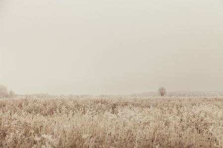 Frost on a grass. Russian provincial natural landscape in gloomy weather. Toned. 免版税图像