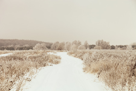 Frost on a grass. Russian provincial natural landscape in gloomy weather. Toned.