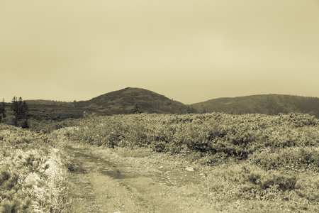 Beautiful deserted landscape of Kunashir island. Toned.