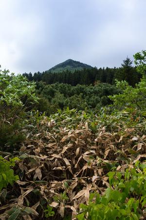 Beautiful landscape of Kunashir island.