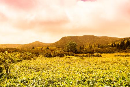 Beautiful landscape of Kunashir island. Toned. 版權商用圖片
