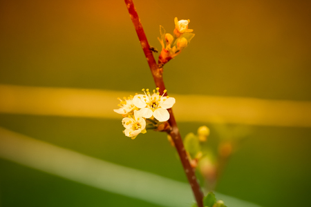 Small new leaves on an cherry tree branch. Spring in the garden. Selection focus. Shallow depth of field. Toned. Imagens