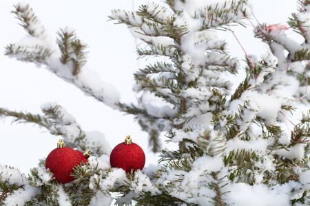 Bright balls on a cristmas tree branches on a clean pure snow for natural winter background. New year composition. Shallow depth of field. Selection focus. Zdjęcie Seryjne