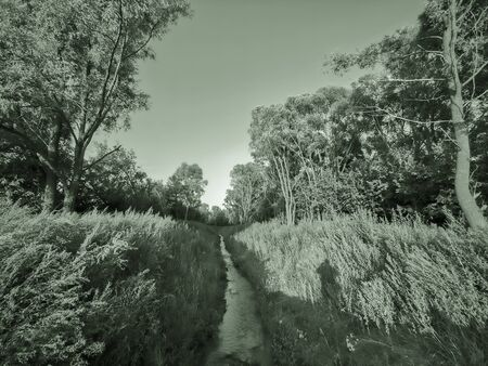 Overgrown shore of a wild forest stream. Toned. 写真素材