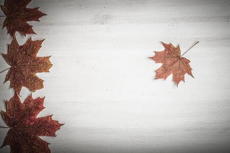 Composition of bright autumn leaves on a light background. Toned. Foto de archivo