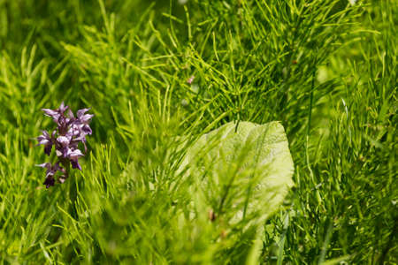 Flowers and leaves in the dense young green grass. Shallow depth of field. Selective focus.