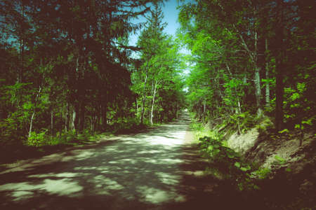 Asphalt road in a sunny forest on Sakhalin island. Toned.