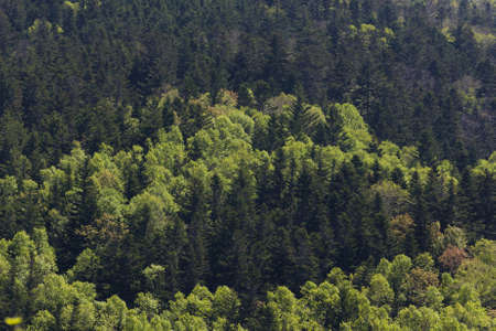 Forest landscape in a sunny day on Sakhalin island.