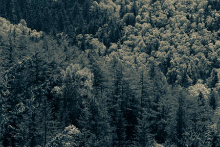 Forest landscape in a sunny day on Sakhalin island. Toned.