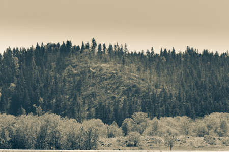 Stormy river in the forest in sunny day on Sakhalin island. Toned.