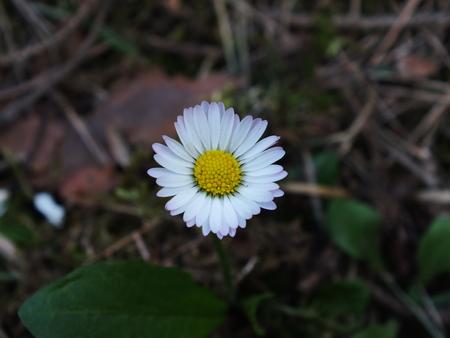 Field daisy 스톡 콘텐츠