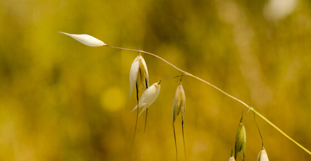 Detail of single dried wild plant on fields photo