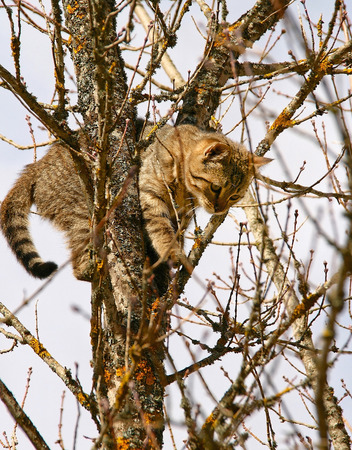 climbed: Cat has climbed the tree as shes afraid of the dog hunting her. Stock Photo