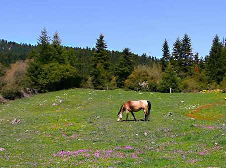 grassing: Idyllic scene of  horse grassing on mountain