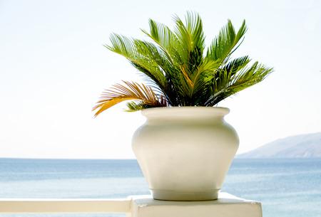 balcony view: White pot with alga plant on balcony. View to Aegean sea,Greece Stock Photo