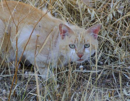affraid: Blondie Tomcat