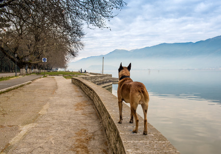 Foggy morning and  dog on a road for pedestrians and bicycles, lake Panvotis. Ioannina ,Greece