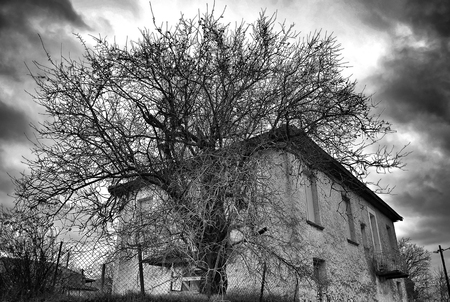 House eating tree. A Village house on a hill ,Greece