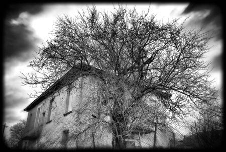 Farm house looks like eating a tree Stock fotó