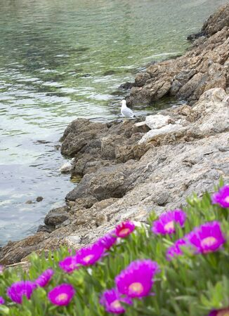 Rocky coast with some red wild flowers and a young seagul Stockfoto