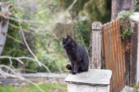 Black cat standing on fence and looking. Stockfoto