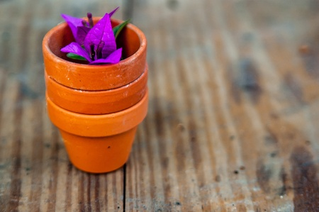 Miniature clay pots and a Bougainvillea flower at the garden Stock Photo - 13988971