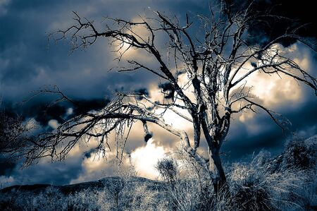 Dead tree against a sunset sky, infrared colors photo