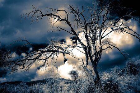 arboles secos: Árbol muerto contra un cielo del atardecer, colores infrarrojos