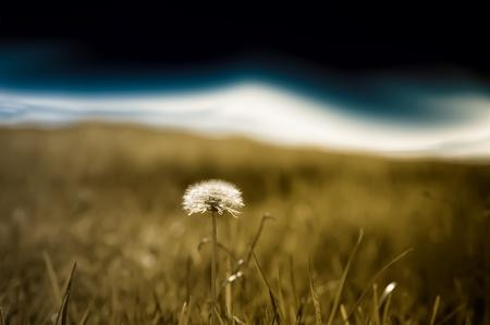 Field view against a dark blue sky