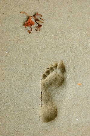 feet in sand: Foostep on a sandy beach and a dead leave