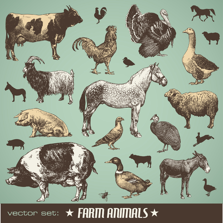 fowls: set: farm animals - stt of various retro illustrations