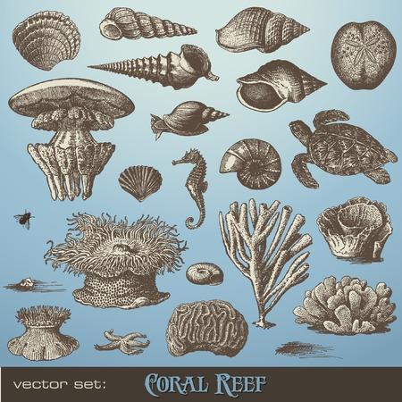 establecer: arrecife de coral - incluyendo diferentes corales, conchas y animales  Ilustración de vector