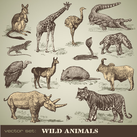 animaux sauvages  Illustration