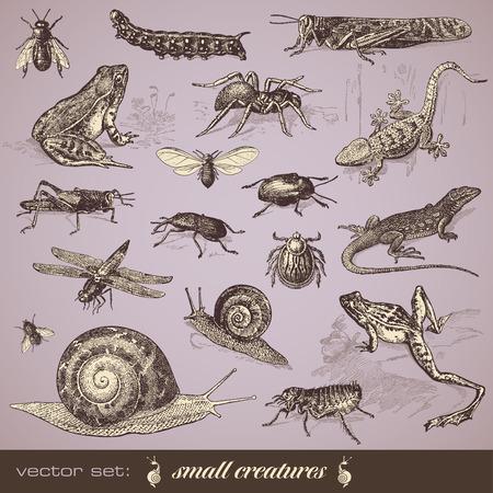 flea: small animals