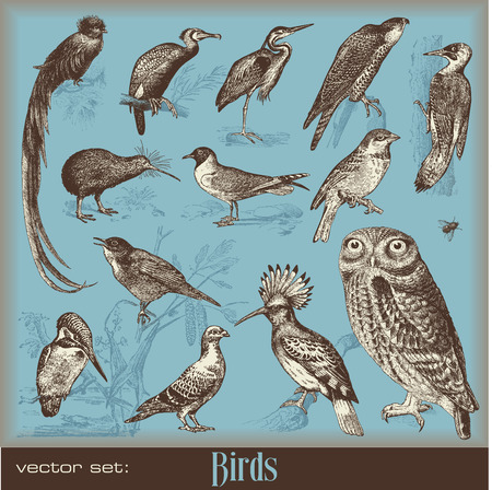 birds - variety of vintage bird illustrations