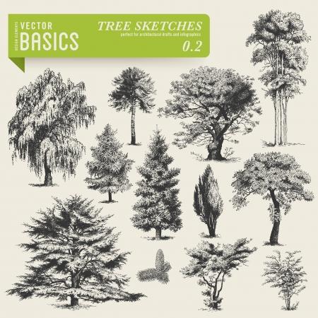 un arbre: vecteur arbre des bases esquisse 2 Illustration