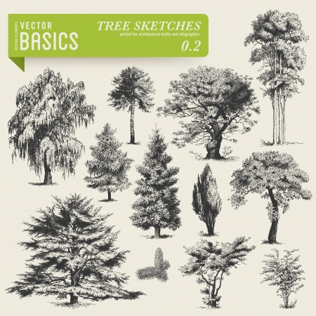 juniper tree: vector basics  tree sketches 2