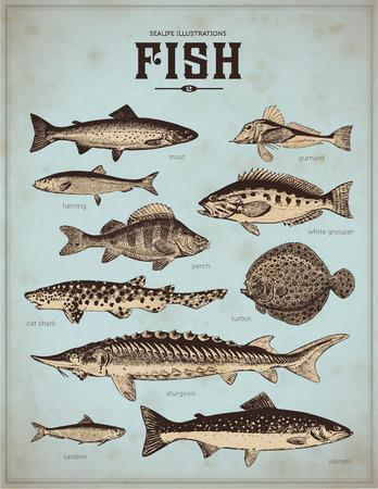illustration of food: ilustraciones sealife pescan 2