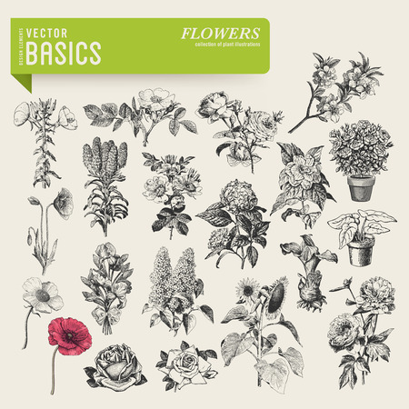 vector basics  garden flowers Vector
