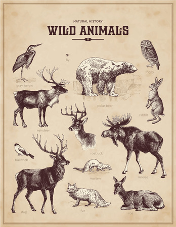 stag: wild animals