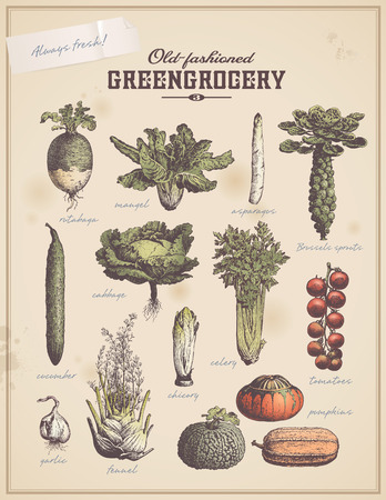 greengrocery - set of vintage vegetable illustrations Vector