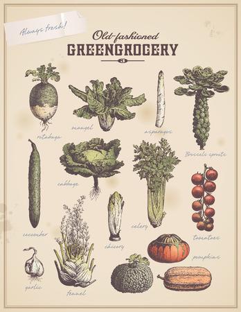 cucumber salad: greengrocery - set of vintage vegetable illustrations