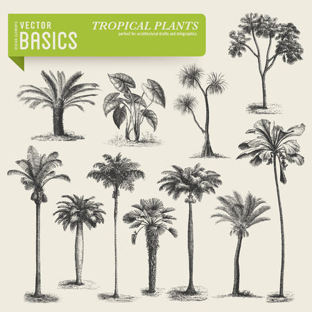 tropical vegetation Stock Illustratie