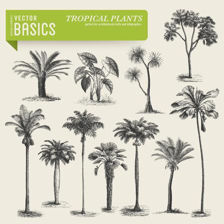 tropical vegetation Illustration