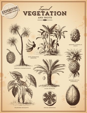 Tropical plants and exotic fruits Stock Illustratie