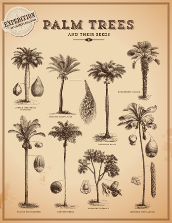 palm trees and Their fruits Stock Illustratie