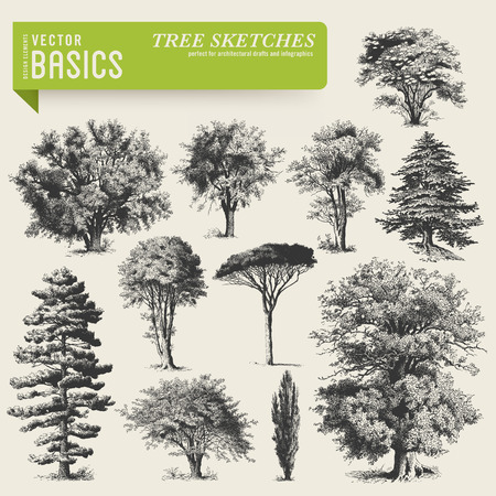 elder tree: vector elements: tree sketches (1) Illustration